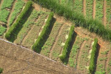 Historia del vetiver en Costa Rica