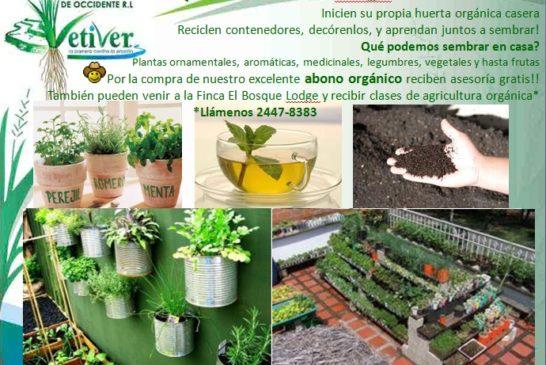 Agricultura orgánica urbana